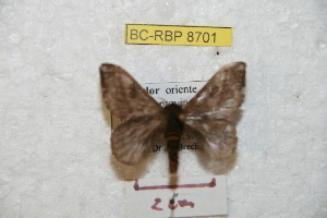( - BC-RBP 8701)  @13 [ ] Copyright (2014) Ron Brechlin Research Collection of Ron Brechlin