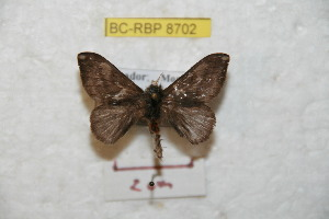( - BC-RBP 8702)  @13 [ ] Copyright (2014) Ron Brechlin Research Collection of Ron Brechlin