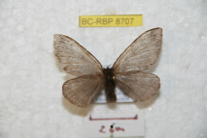 ( - BC-RBP 8707)  @14 [ ] Copyright (2014) Ron Brechlin Research Collection of Ron Brechlin