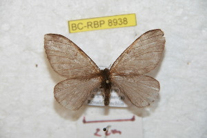 ( - BC-RBP 8938)  @11 [ ] Copyright (2015) Ron Brechlin Research Collection of Ron Brechlin