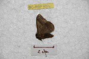 ( - BC-RBP 9002)  @13 [ ] Copyright (2015) Ron Brechlin Research Collection of Ron Brechlin