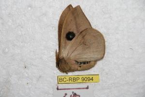 ( - BC-RBP 9094)  @12 [ ] Copyright (2015) Ron Brechlin Research Collection of Ron Brechlin