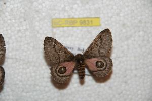 (Auroraia - BC-RBP 9831)  @14 [ ] Copyright (2015) Ron Brechlin Research Collection of Ron Brechlin