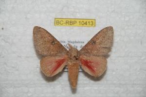 (Syssphinx santamartaensis - BC-RBP 10413)  @12 [ ] copyright (2017) Ron Brechlin Research Collection of Ron Brechlin