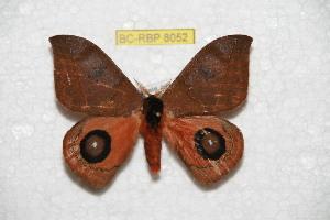 ( - BC-RBP 8052)  @13 [ ] Copyright (2013) Ron Brechlin Research Collection of Ron Brechlin