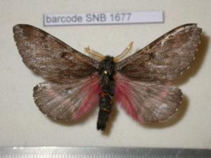 ( - barcode SNB 1677)  @13 [ ] Copyright (2010) Stefan Naumann Research Collection of Stefan Naumann