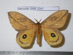 ( - barcode SNB 2041)  @14 [ ] Copyright (2010) Stefan Naumann Unspecified