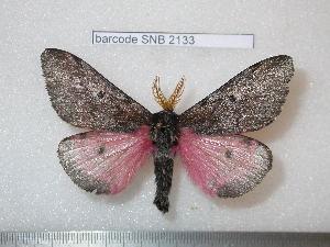 ( - barcode SNB 2133)  @13 [ ] Copyright (2010) Stefan Naumann Research Collection of Stefan Naumann