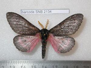 ( - barcode SNB 2134)  @14 [ ] Copyright (2010) Stefan Naumann Research Collection of Stefan Naumann