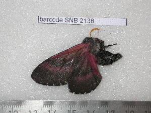 ( - barcode SNB 2138)  @12 [ ] Copyright (2010) Stefan Naumann Research Collection of Stefan Naumann