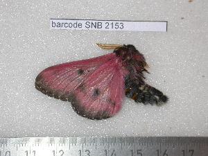 ( - barcode SNB 2153)  @11 [ ] Copyright (2010) Stefan Naumann Research Collection of Stefan Naumann