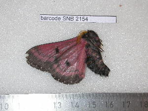 ( - barcode SNB 2154)  @12 [ ] Copyright (2010) Stefan Naumann Research Collection of Stefan Naumann