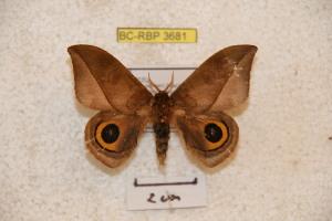 ( - BC-RBP 3681)  @11 [ ] Copyright (2010) Ron Brechlin Research Collection of Ron Brechlin