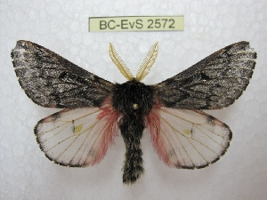 ( - BC-EvS 2572)  @13 [ ] Copyright (2012) Eric van Schayck Research Collection of Eric Van Schayck
