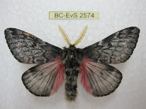 ( - BC-EvS 2574)  @15 [ ] Copyright (2012) Eric van Schayck Research Collection of Eric Van Schayck