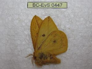 ( - BC-EvS 0447)  @11 [ ] Copyright (2010) Eric Van Schayck Research Collection of Eric Van Schayck