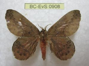 (Travassosula - BC-EvS 0908)  @14 [ ] Copyright (2010) Eric Van Schayck Unspecified