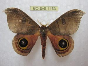 ( - BC-EvS 1153)  @14 [ ] Copyright (2010) Eric Van Schayck Research Collection of Eric Van Schayck