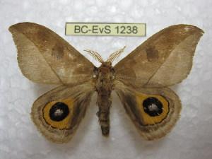 ( - BC-EvS 1238)  @14 [ ] Copyright (2010) Eric Van Schayck Research Collection of Eric Van Schayck