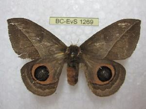 ( - BC-EvS 1269)  @14 [ ] Copyright (2010) Eric Van Schayck Research Collection of Eric Van Schayck