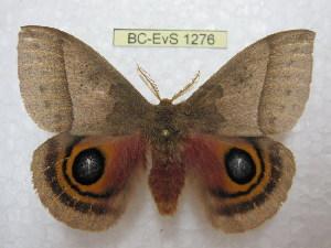 ( - BC-EvS 1276)  @11 [ ] Copyright (2010) Eric Van Schayck Research Collection of Eric Van Schayck