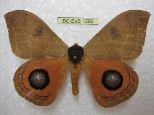 ( - BC-EvS 1292)  @11 [ ] Copyright (2010) Eric Van Schayck Research Collection of Eric Van Schayck
