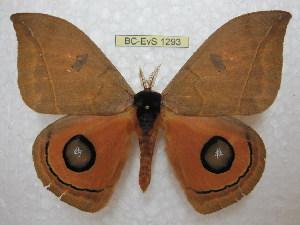 ( - BC-EvS 1293)  @15 [ ] Copyright (2010) Eric Van Schayck Research Collection of Eric Van Schayck