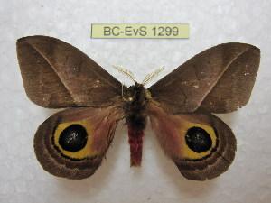 ( - BC-EvS 1299)  @15 [ ] Copyright (2010) Eric Van Schayck Research Collection of Eric Van Schayck