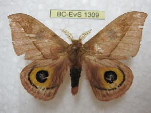 ( - BC-EvS 1309)  @14 [ ] Copyright (2010) Eric Van Schayck Research Collection of Eric Van Schayck