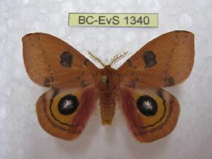 ( - BC-EvS 1340)  @14 [ ] Copyright (2010) Eric Van Schayck Research Collection of Eric Van Schayck