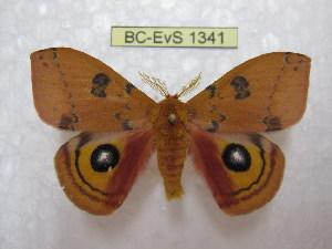 ( - BC-EvS 1341)  @13 [ ] Copyright (2010) Eric Van Schayck Research Collection of Eric Van Schayck