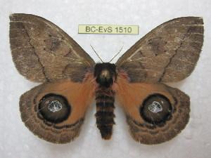 ( - BC-EvS 1510)  @14 [ ] Copyright (2010) Eric Van Schayck Research Collection of Eric Van Schayck