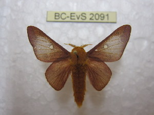( - BC-EvS 2091)  @13 [ ] Copyright (2010) Eric Van Schayck Research Collection of Eric Van Schayck