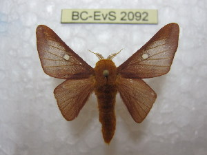 ( - BC-EvS 2092)  @11 [ ] Copyright (2010) Eric Van Schayck Research Collection of Eric Van Schayck