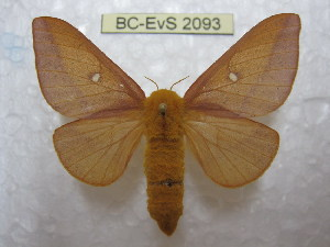 ( - BC-EvS 2093)  @11 [ ] Copyright (2010) Eric Van Schayck Research Collection of Eric Van Schayck