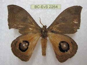 ( - BC-EvS 2264)  @13 [ ] Copyright (2010) Eric Van Schayck Research Collection of Eric Van Schayck