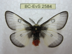 ( - BC-EvS 2584)  @11 [ ] Copyright (2012) Eric van Schayck Research Collection of Eric Van Schayck