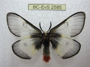 ( - BC-EvS 2585)  @11 [ ] Copyright (2012) Eric van Schayck Research Collection of Eric Van Schayck