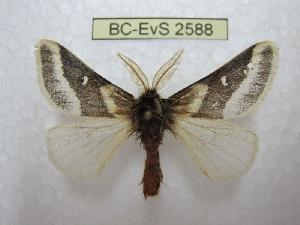 ( - BC-EvS 2588)  @11 [ ] Copyright (2012) Eric van Schayck Research Collection of Eric Van Schayck