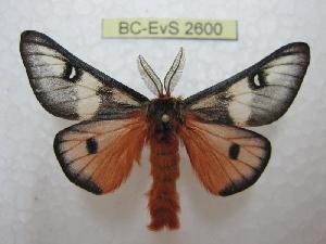 ( - BC-EvS 2600)  @11 [ ] Copyright (2012) Eric van Schayck Research Collection of Eric Van Schayck