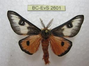 ( - BC-EvS 2601)  @11 [ ] Copyright (2012) Eric van Schayck Research Collection of Eric Van Schayck
