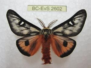 ( - BC-EvS 2602)  @11 [ ] Copyright (2012) Eric van Schayck Research Collection of Eric Van Schayck