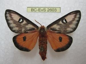 ( - BC-EvS 2603)  @11 [ ] Copyright (2012) Eric van Schayck Research Collection of Eric Van Schayck