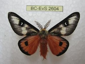 ( - BC-EvS 2604)  @14 [ ] Copyright (2012) Eric van Schayck Research Collection of Eric Van Schayck