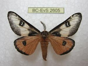 ( - BC-EvS 2605)  @11 [ ] Copyright (2012) Eric van Schayck Research Collection of Eric Van Schayck