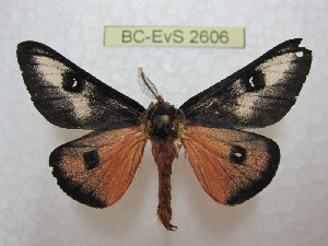 ( - BC-EvS 2606)  @12 [ ] Copyright (2012) Eric van Schayck Research Collection of Eric Van Schayck