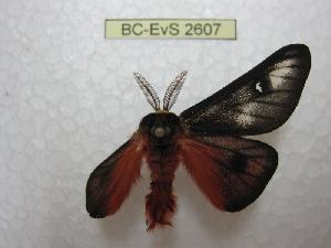 ( - BC-EvS 2607)  @12 [ ] Copyright (2012) Eric van Schayck Research Collection of Eric Van Schayck