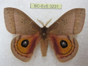 ( - BC-EvS 3231)  @11 [ ] Copyright (2012) Eric van Schayck Research Collection of Eric Van Schayck