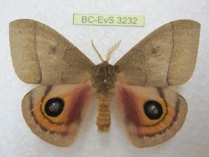 ( - BC-EvS 3232)  @11 [ ] Copyright (2012) Eric van Schayck Research Collection of Eric Van Schayck