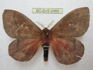 ( - BC-EvS 2460)  @14 [ ] Copyright (2010) Eric Van Schayck Research Collection of Eric Van Schayck